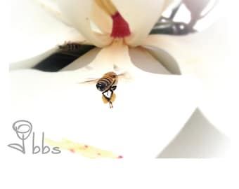 nature photography, bee photograph, flower photography, nature wall art, flower and bee photograph
