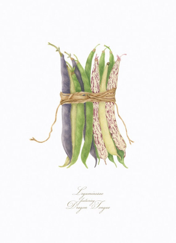 Legumes featuring Dragon Tongue BOTANICAL PRINT
