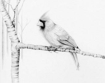 Cardinal Bird Drawing Pencil Drawing Giclee Fine Art Print of my Original Artwork Woodland Bird Pencil Drawing ohtteam grey black and white