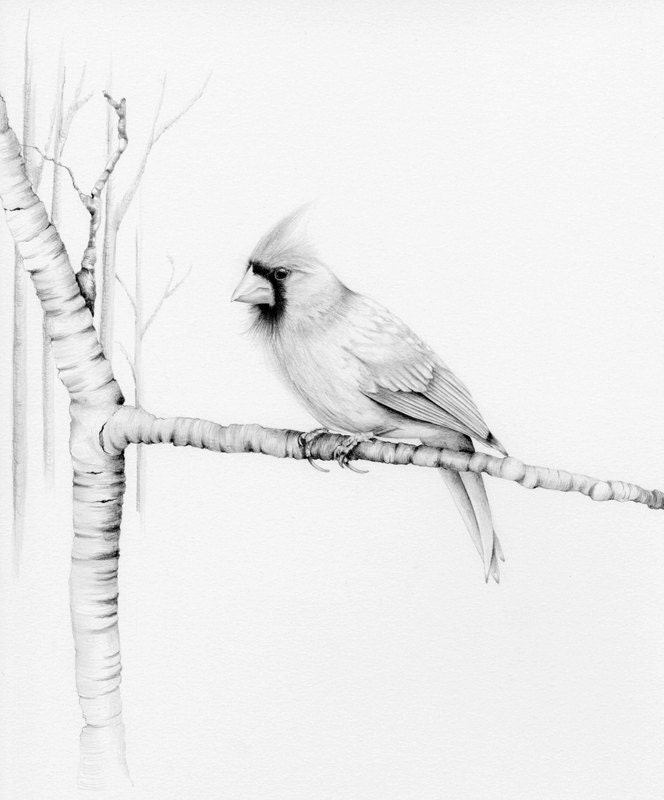 Northern Cardinals Drawing by Marilyn Smith  |Cardinal Bird Drawings