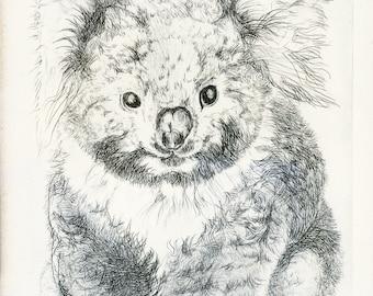 vintage etching, kinkajou, mid century,koala,christine mcginnis,1960s,matted, framed, wall hanging