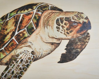 Sea Turtle woodburned and hand painted ***Sale