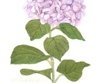 Purple Hydrangea 5x7 Original Watercolor by Wanda Zuchowski-Schick