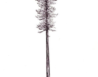 "California Redwood Print:  Digital print of an original drawing available 5x7"" or 8x10"""