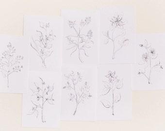 Botanical Print Set, Set of 8 Floral Prints