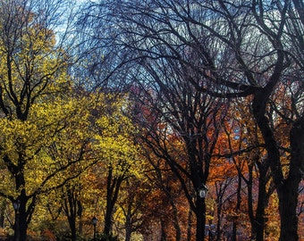 Last Vestiges of Fall NYC Fine Art Urban Landscape Photography, Trees, Central Park, Print, Green, Orange, Yellow