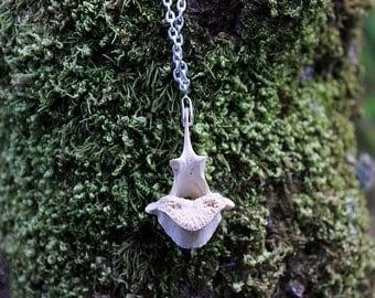 deer vertebrae necklace