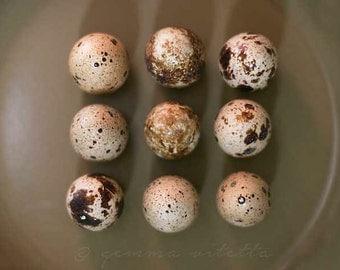 Honey, Let's Eat! - Quail Eggs Photo, Still Life Fine Art Photo, Food Print, Kitchen Art, Cottage Chic Art, Photo Gifts, Rustic Print Decor