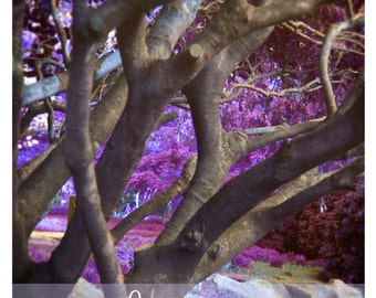 """5 x 7 Digital File French Romance Photography,Enchanting, Nature, Magical """", Home Decor, Purple, Woodlands,Tree, Pastel, French Country,,"""