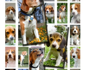 Beagle Dog Pet Canine Snoopy Digital Images Collage Sheet 1x2 inch Rectangles Domino Commercial INSTANT Download RD9