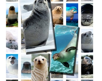 Seal Sea Lion Ocean Wild Animal Zoo Digital Images Collage Sheet 1x2 inch Rectangles Domino Commercial INSTANT Download RD47