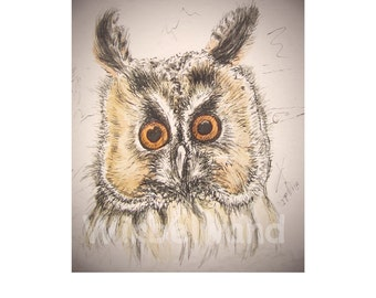Print of an ink- and water colour painting, sepia shaded variation - Long-eared Owl I (8 x 12 inch)