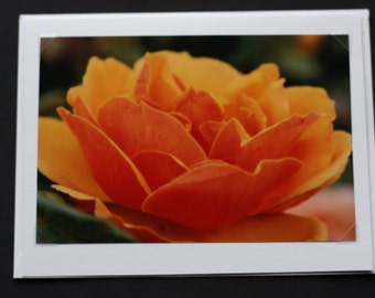 Orange Rose from the side, Flowers in Nature, Close up, Greeting Card