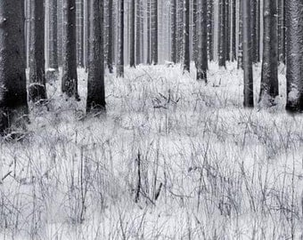 Winter Forest Photography Backdrop