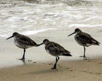 Glossy Print: Birds on the Beach in Rodanthe, NC