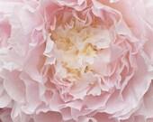 Peony Photography - Botanical Fine Art Photograph of Peony Flower, Large Wall Art, Home Decor