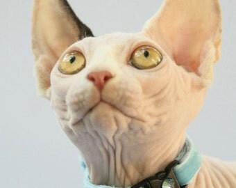 Soft Velvet Cat Collar - Baby Blue - Kitten or Large Size