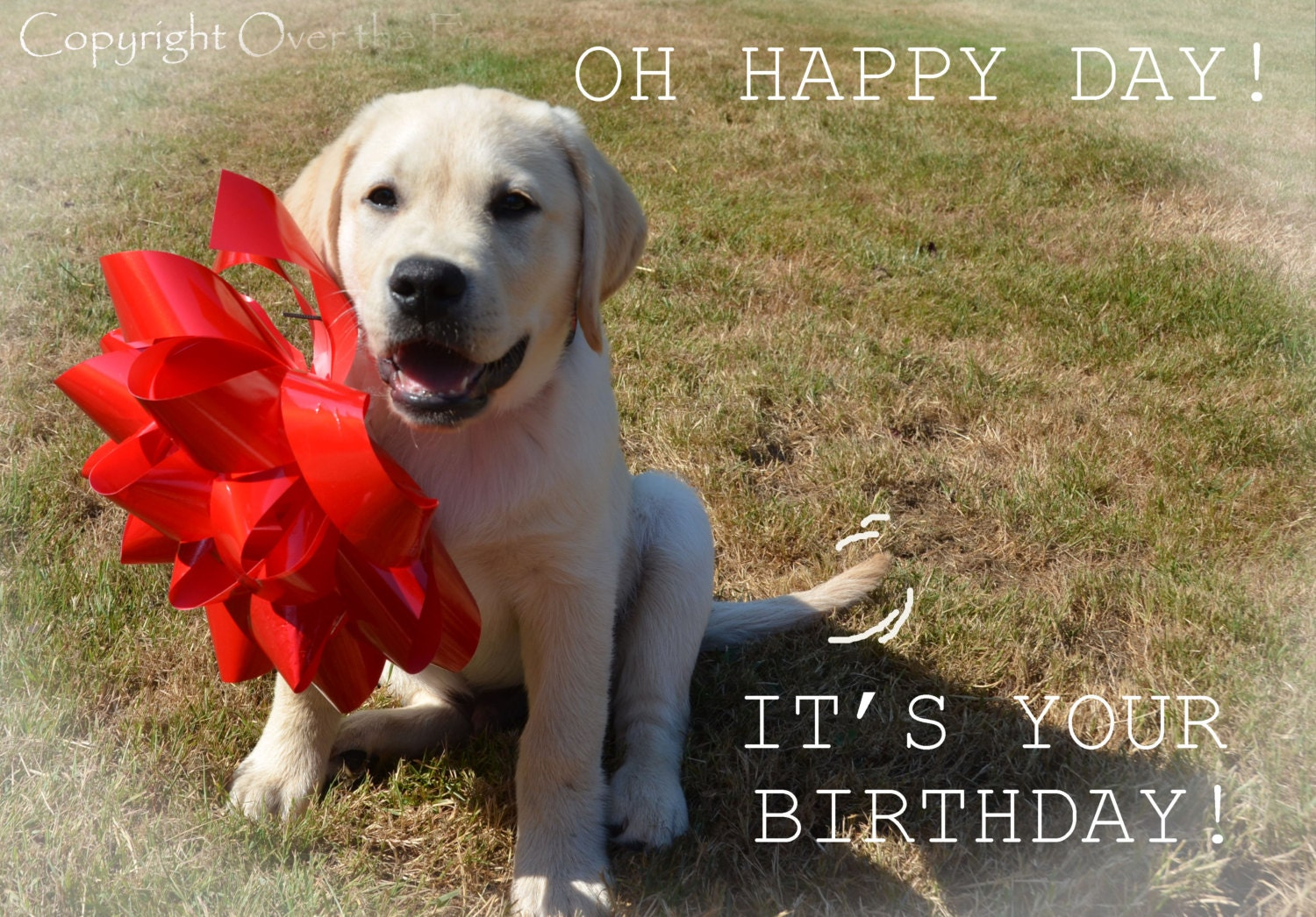Dog Birthday Card YELLOW LABRADOR PUPPY with Happy Birthday – Labrador Birthday Cards