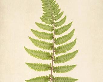Botanical Print, Rustic Decor, Fern Art, Woodland, Forest, Nature Photography, Botanical Art, Wall Art, Fine Art Print, Wall Decor