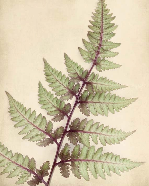 Botanical Print, Fern Art, Nature Photography, Wall Art, Fern Art, Woodland Wall Art, Sage Green Taupe