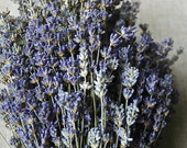 "200 STEMS of English Lavender 8-10"" Long"