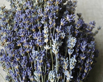 "200 STEMS of English Lavender 8-12"" Long"