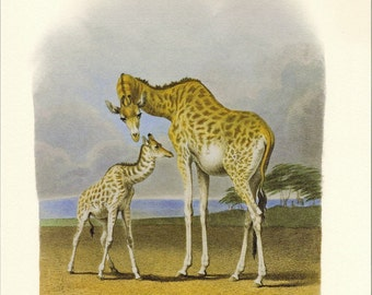 Natural History Print Hill's Mother Giraffe and Her Newborn Illustration to Frame or for Paper Arts PSS 2055