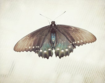 """Butterfly photography 