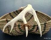Antler Basket with Real Deer Shed Antler  with Gizzard Basket or Buttocks Basket Shape