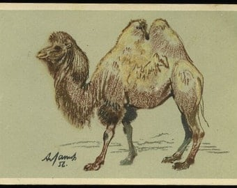 Vintage Russian camel postcard, Artist- A. Laptev vintage postcard, SharonFosterVintage