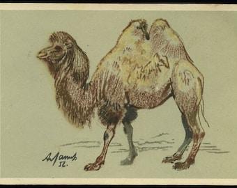 Vintage Russian camel postcard, Artist- A. Laptev