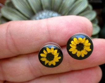 REAL Miniature Sunflower Post Earrings - round posts with Black background - Tiny little yellow flower studs, plugs, daisy, organic, natural