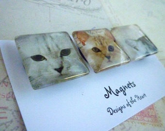Cute Cats - Square Glass Magnet set