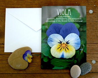 pansy viola photo note card flower folklore // Nature Floral Plant Life Botanical // Prairie Garden