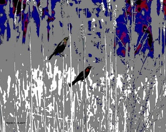 Grackle Bird Art, Blue Gray, Wildflowers Field Meadow, Abstract Realism, Digital Print, Wall Hanging, Home Decor, 8 x 10, Giclee Print