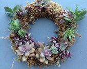 Live succulent wreath 8""