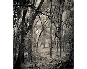 Sleepy Hollow,Black and White,Fine Art Photography,Haunting,Woodland,Misty Landscape,Dramatic Home Decor,Ghostly,Gray,Large Wall Art,Forest