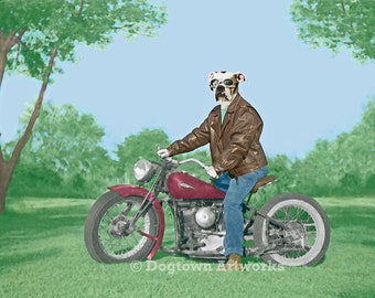 The Wild One, large original photograph of white boxer dog wearing leather jacket on a vintage Indian Scout motorcycle