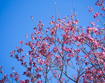 Beautiful pink flowers on blue sky