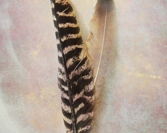 FEATHER DREAM Color Original Art Photograph