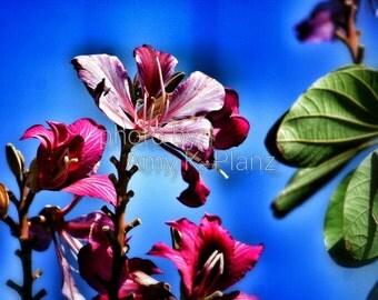 "8"" x 10"" Fine Art Bright Tropical Flower Photographic Print - Metallic Finish"