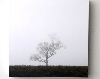 Lone Tree Photography, Minimalist Art, Nature, Landscape, Earth Tones, Brown and White, Fog, 8X8 Wood Panel, Wall Hanging, Ready to Hang