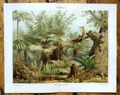 1894 ferns original antique botanical tropical flora print