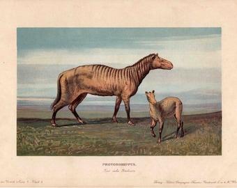 1902 dinosaur rare antique print - protorohippus
