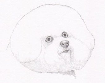 Bichon Frise Signed Personalized Original Pencil Drawing Double Matted Print -Free Shipping- Desert Impressions