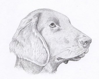 Flat Coated Retriever Signed Personalized Original Pencil Drawing Double Matted Print -Free Shipping- Desert Impressions