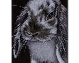BUNNY 70 rabbit black dutch Easter pet pencil painting Sandrine Curtiss Art Limited Edition Print ACEO