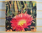"Summer Iceplant - 7""x7"" Square Distressed Photo Transfer on Wood"