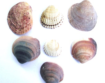 Mediterranean Sea Shells. Beach Shell collection by Oceangifts