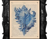 Blue Seashell - Seashell Art print - Blue Shell art on antique book page or music page from 1863